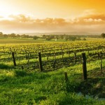 napa-valley-wine-tour